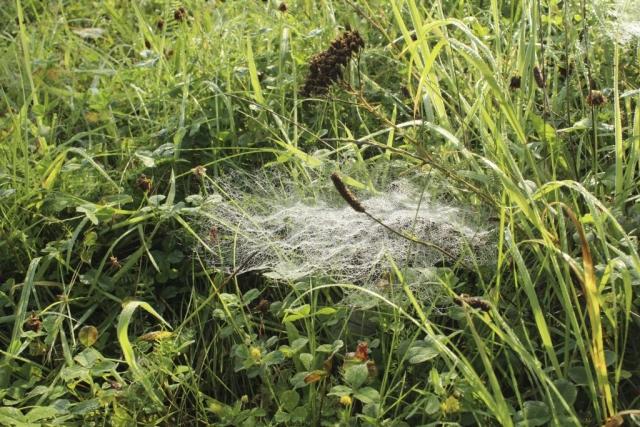 Spinnenzelt
